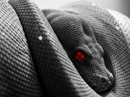 Čūskas dzimums