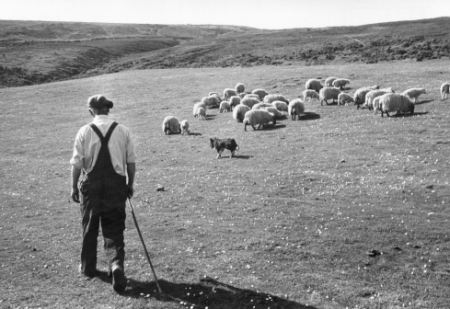 dievbijīigs gans un avis