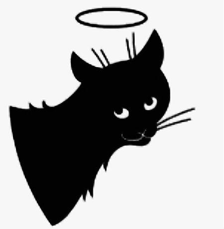 kaķītis no Dieva