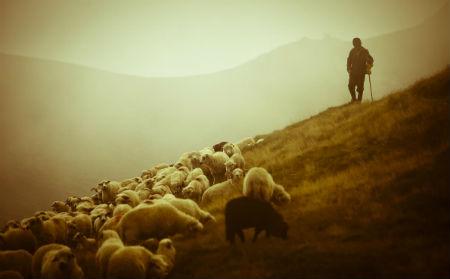 Labais Gans un Viņa avis