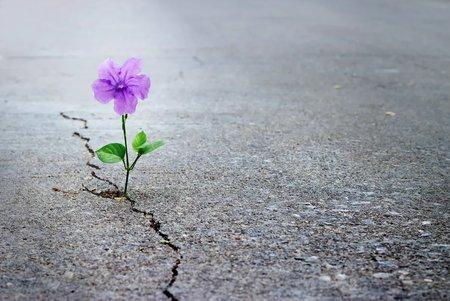 Cerība mūs nepamet