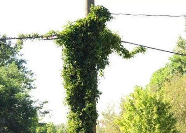 Jēzus siluets uz elektrības staba