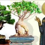 Hērods un Bonsai kociņi