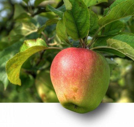 Koks nes labus augļus