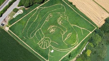 Lutera seja parādījusies kukurūzas laukā